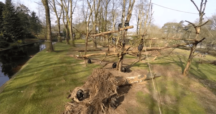 チンパンジー対ドローン